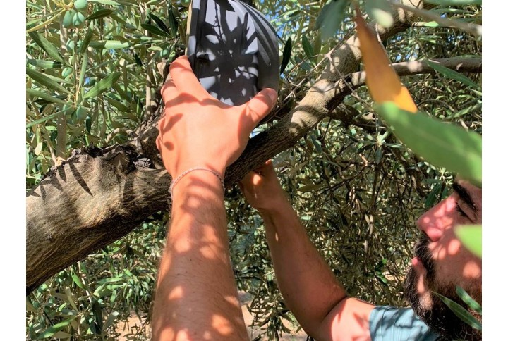 Ponemos a prueba al bioestimulante Stilo Hydro en una finca de olivar