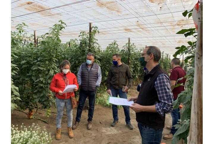Analizamos los resultados del bionematicida Adina en tomate ecológico