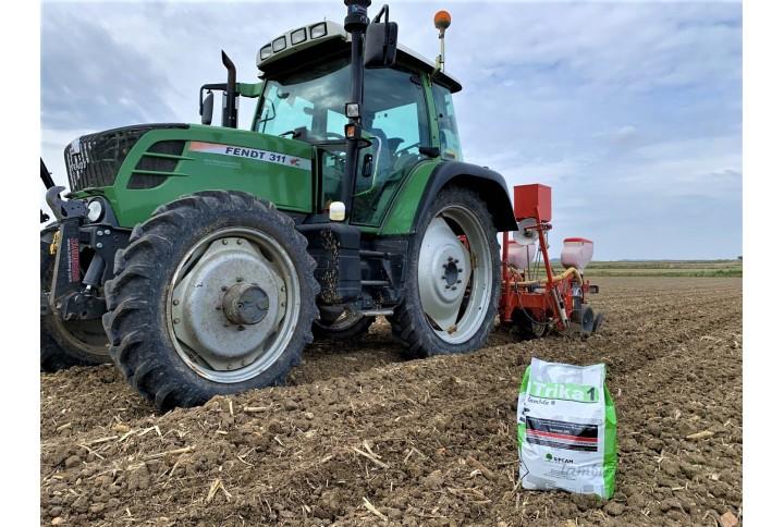 Adiós a las plagas en maíz y tomate de industria desde la siembra o trasplante
